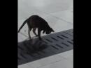 Прирожденный охотник - Подпишитесь на нас - newfunvideos Сохраните Видео Нажмите''Поделиться ❤❤❤