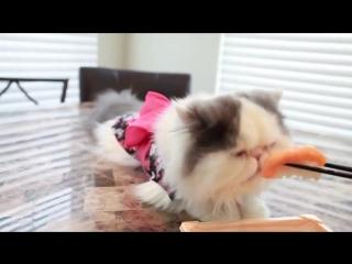 Гламурный кот ест суши)