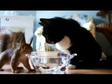 ?️  Baby Squirrel Alexandra & Cat Saijury  ?️