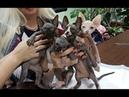 Презентация котят канадских сфинксов из питомника PCA РУБИСЕТ