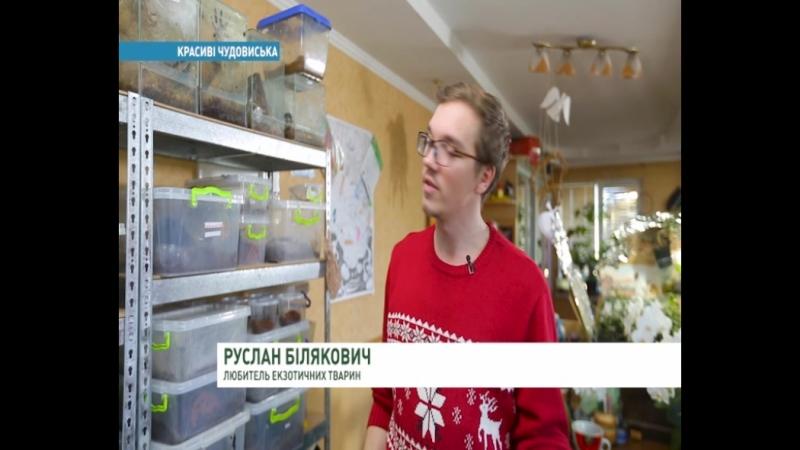Ранок Україна. Цікавий сюжет із Щасливим Павуком)