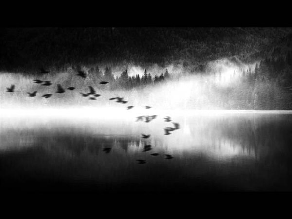 Nervenklinik - Крылья (Химера Cover)