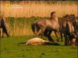 Империя лошадей. История покорения.