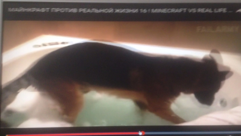 Собака роет воду 😂😂😂😂