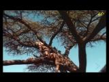 Dario G. - Sunchyme