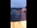 Капибара купается