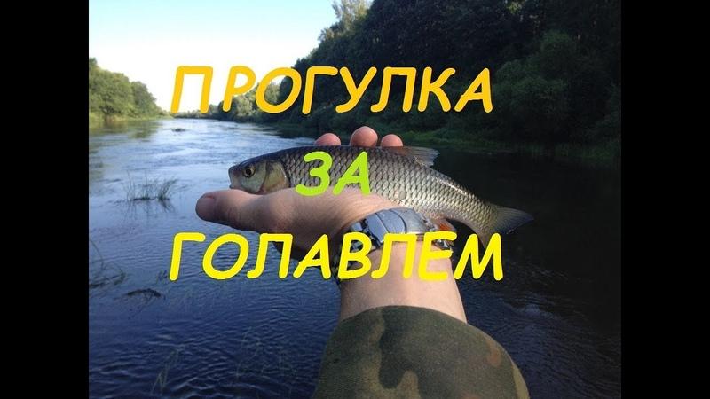Выпуск 28 Прогулка за голавлем