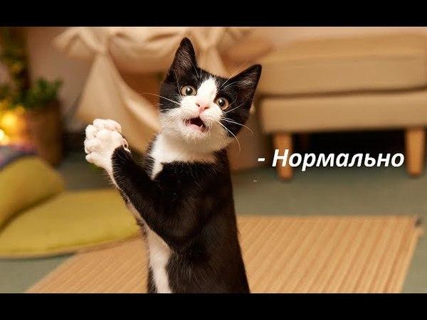Как у тебя дела? Кот говорит - нормально!