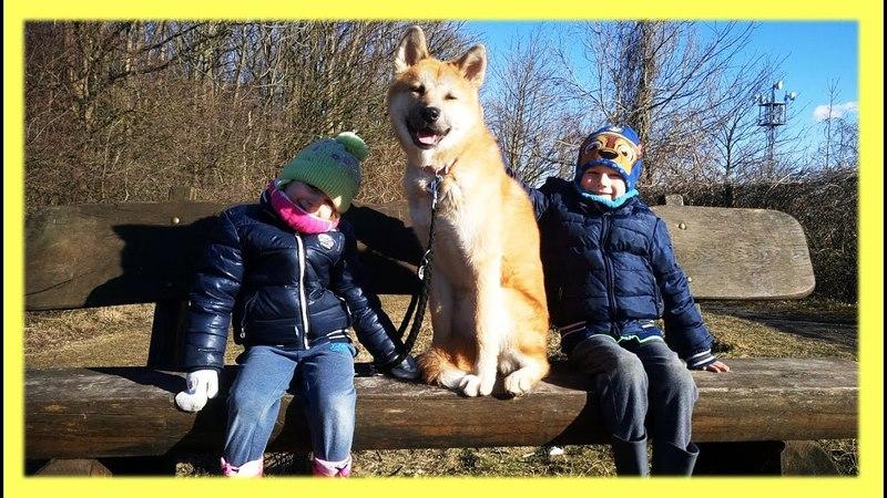 Собаки и дети Видео для детей Влог Японская Акита ину Akita Inu Dog Breed walk with Kids Vlog