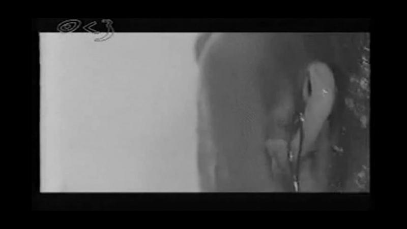 Dreadful Shadows - Twist In My Sobriety (Tanita Tikaram cover)