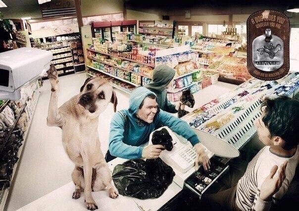 Пoтрясающая реклама приюта для животных. Собака будет вас любить, кем бы вы ни были. Приютите oдну.