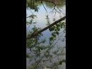Жабы в июне в Парке Маяковского