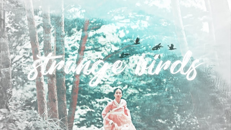 Strange birds. | mr. sunshine