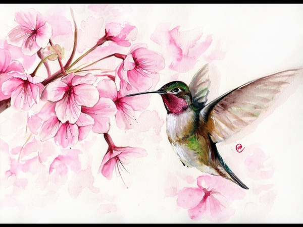 Watercolor Hummingbird and Cherry Blossom II Painting Demonstration