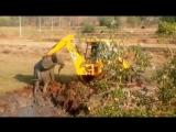 Спасение слоненка из болота в Индии сняли на видео!