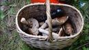 В Чудовском лесу погибла пожилая женщина