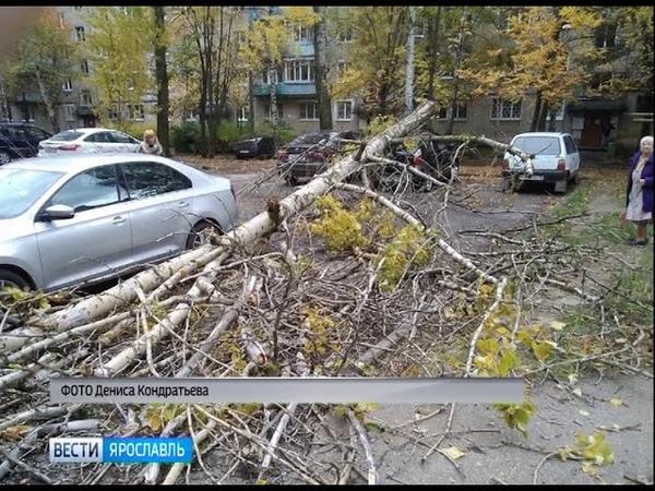 В Ярославле на автомобиль упало дерево