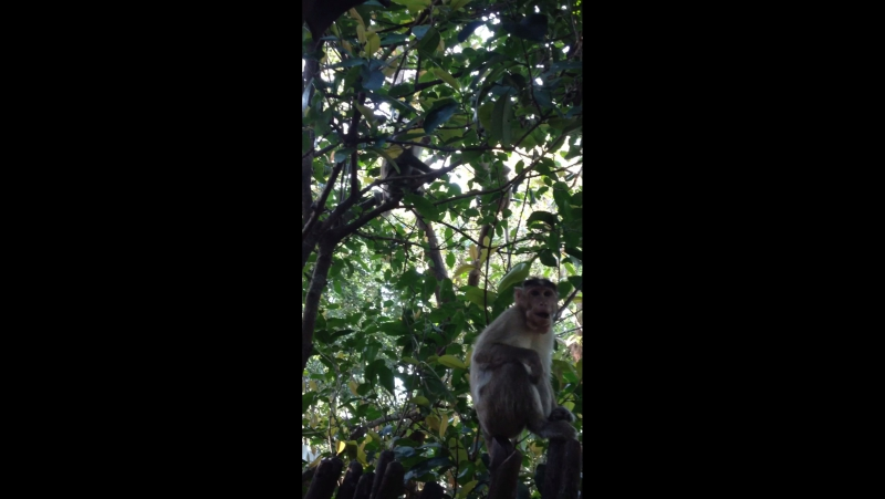 Обезьянки в джунглях