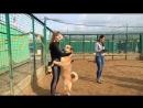Собака налетела и заобнимала ПРИЮТ в Москве