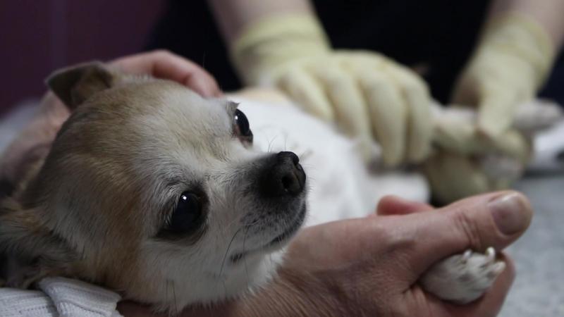 ветеринарная клиника DSCHON