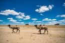Экспедиция «Вокруг света за 70 дней» продолжает движение по Монголии – и скучать им там яв…