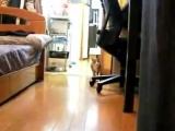 Кот стелз!