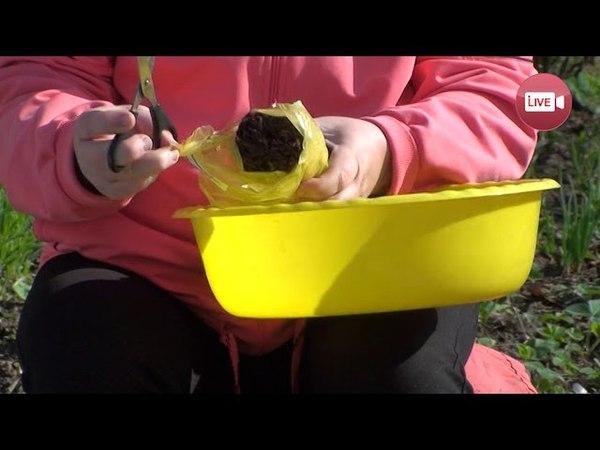 Блог садовода и огородника Светланы Кацаповой 80 вып (клубника, лук, редис)