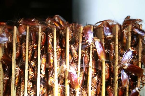 Китайцы припахали тараканов к утилизации отходов
