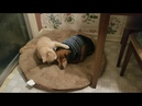 Cat Comforts Blind Sick Dog - 1011784