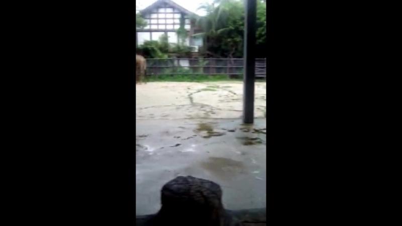 Video-12e8b40942f3648d1d3c5bf8d6d798a3-V.mp4