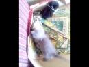 котята няшки