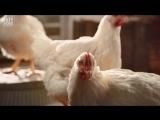 Ролик KFC возглавил топ самой возмутительной рекламы