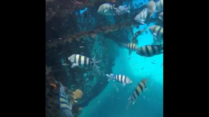 Удивительный и самобытный подводный мир Красного моря поражает воображение путешественника и паломника на Святой Земле.