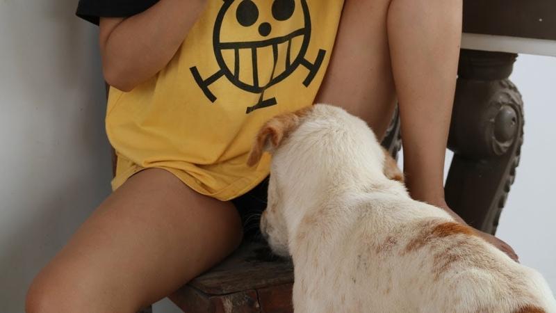 Удивительная забавная симпатичная девушка, играющая с симпатичной собакой у себя дома - Как играть с