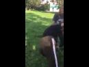 18 В Верхней Салде школьница избила подругу на камеру
