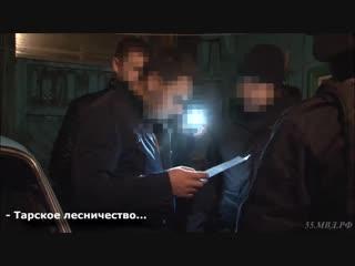 Незаконные рубки в Тарском районе