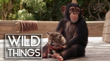 Animal Odd Couples Full Documentary Wild Things