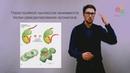 Поддержание и копирование геномов Хроматин Регуляция работы генов