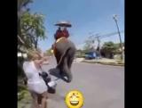 раздраженный слон