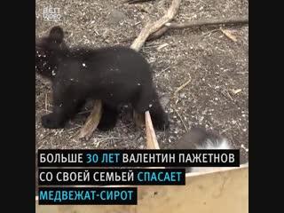 Приют для медвежат-сирот. Уважение людям - Интеллектуариум | наука и образование