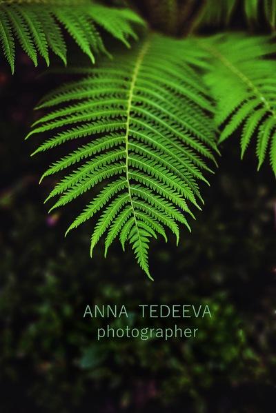 Анна Тедеева