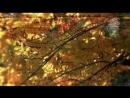 Черный кофе. Листья - С ветки падающий лист