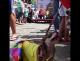 Собаки на карнавале