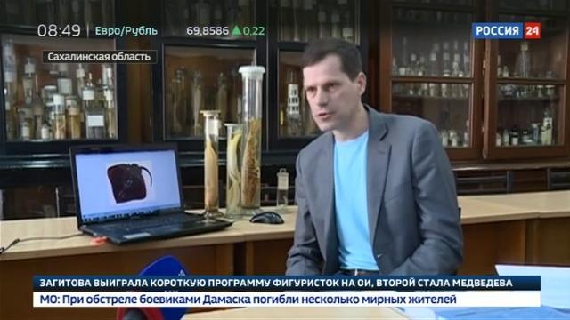 Новости на Россия 24 • Челюсти: к берегам Сахалина повадились акулы-людоеды