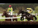 The Storyteller Crazy Ending 2018 Punchestown G1 3m Novice Chase Build Up Race Reaction
