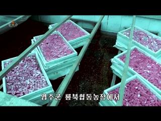 Новости КНДР за 19 июня 2018 года