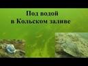 Под водой в Кольском заливе / Under water in Kola Bay