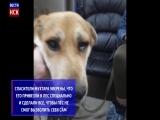 Новосибирцы спасли замурованного в будке пса