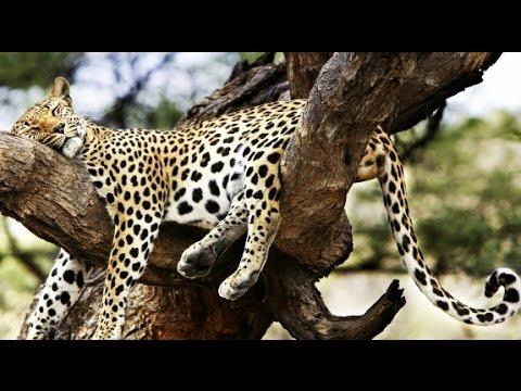 MSQRD Маскарад-Леопард