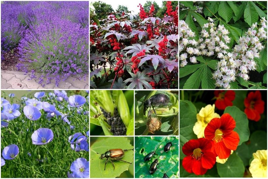 Растения против насекомых-вредителей, таблица